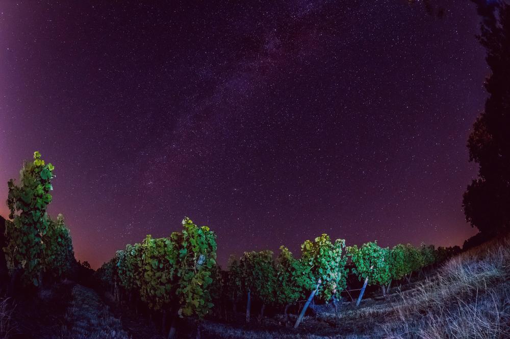 estrellas viñedos