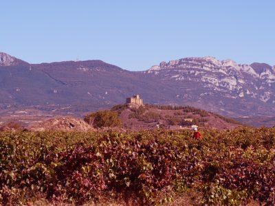 castillo davalillo san asensio